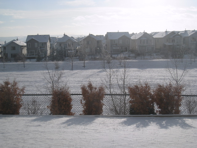 backyard-dec4.JPG