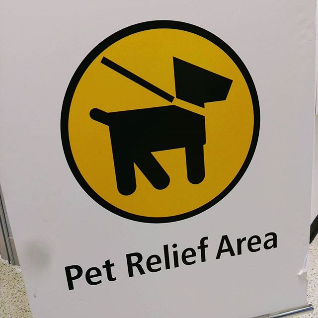 Spotted at #SEATAC. Makes sense given the number of pets I see flying. I wonder who gets the cleanup job?